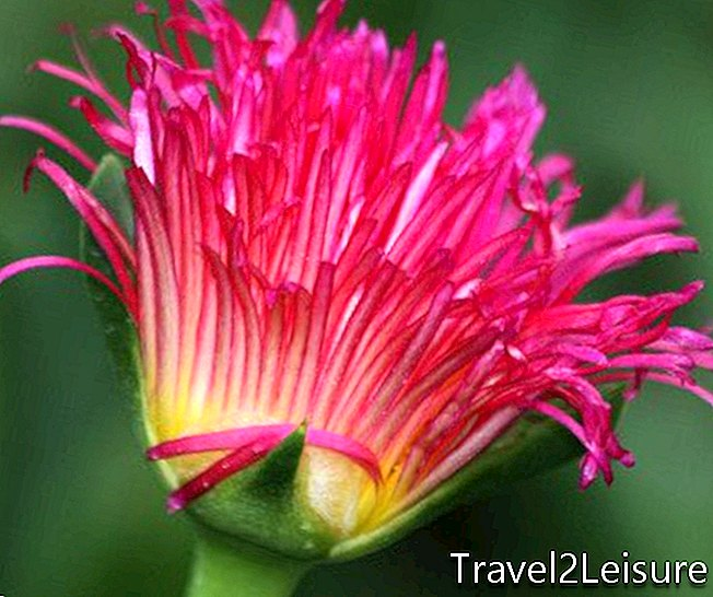 Kirstenbosch Botanical Garden close-up 4